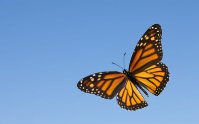 The Butterfly Theory-Deacon Rick Stachura